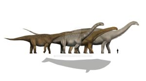 Largest Sauropods? by Pachyornis