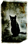 Hammamet Black Cat by SVEM