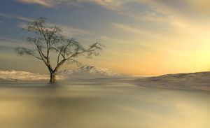Winter Tree by Miraphotos