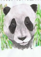 Panda watercolor by LittleGreenSpirit