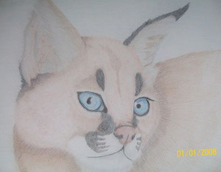 Caracal Lynx by Gothic-Night-Raven