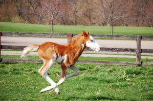 The Next Kentucky Derby Winner by guardianhorse