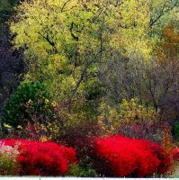 Shades of Autumn 14 by MadGardens