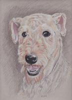 Pet Portrait: Airedale Terrier by SeraphSisters