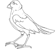 fail bird lineart by nightspiritwing