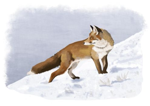 FOX digital Painting by Mathieustern