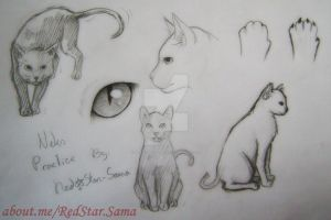 Cat Practice by RedStar-Sama