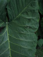 Plant Texture 02. by stock-basicality