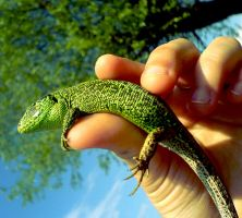reptile by floripecampii