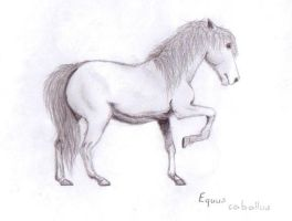 white horse by Rutalo