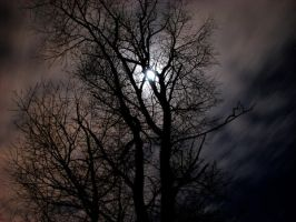 Moon behind tree 2 by Keith-D