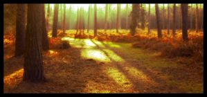 Winter Gold by Forestina-Fotos