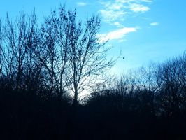 Ash Tree Under the Cold Light of Sunset by SrTw