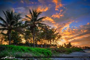 Sunset-Over-Palm-Trees-Jupiter-Ocean-Park by CaptainKimo