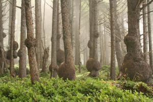 Misty Burls by I-Heart-Photos