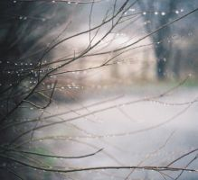 Branches also cry... by elivgarg