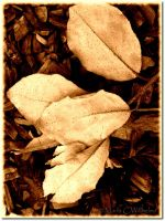 Textured Leaves Sepia by MariaWillhelm