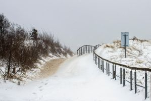 13-03 Snowy Path by evionn