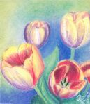 tulips by rodica