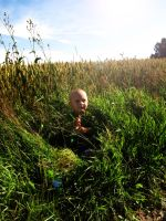 In the field by Andenne