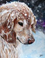 Golden Retriever Snow Frolic by ThisArtToBeYours