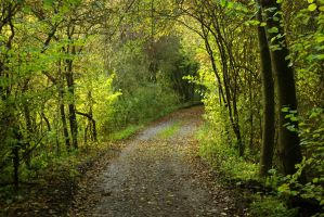 Green path by MurphyL6