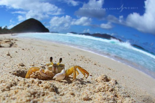 A Crab's World by Nate-Zeman