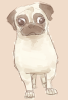 Pug by coffeeatthecafe