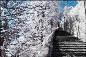 winter trees and summer steps by monkeyheadmushroom