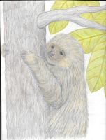 Baby 2 toed Sloth WIP by EvilScarrlett