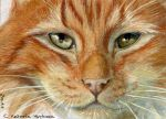 ACEO Ginger Cat by sschukina
