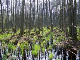 Swamps XVII by Vrolok-stock