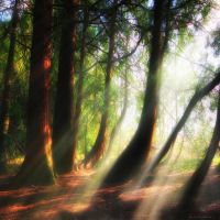 just dream... by ildiko-neer
