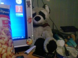 My Raccoon Plush 81 by PoKeMoNosterfanZG