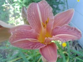 Lily 1 by Guiding-Light-HM