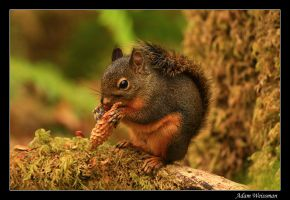 Hungry squirrel by Legioner