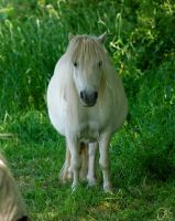 White Pony by The-Rover