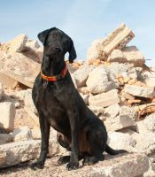 black lab on rubble by terryrunion