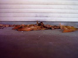 Autumn leaves by twofortheprice
