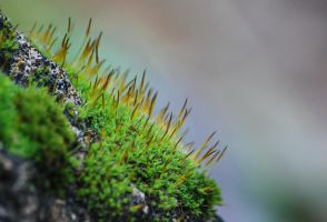 happy moss by newdawn84