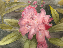 Rhododendrons - Watercolor by TamHorse