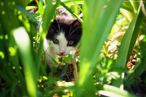 Stalker In The Flowers. by pasofino6