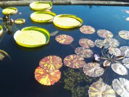 Summer of the Lily Pond by SiberianDelerium