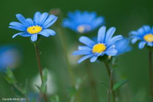 Blue Flowers 2 by DanielleMiner