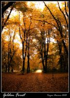 Golden Forest by snake-fisher