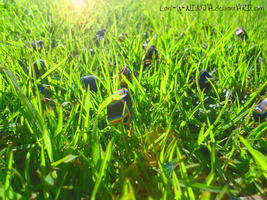 In the grass by Lani-is-NINJA