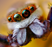 Spider with sharingan project. by Sonic767