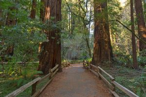 Muir Woods Trail II - Exclusive HDR Stock by somadjinn