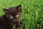kitten in the grass by Liiinnea-A