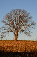 The Tree by TLCPhotography63